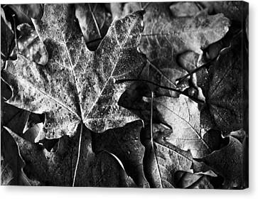 Out In The Cold Canvas Print by Christi Kraft
