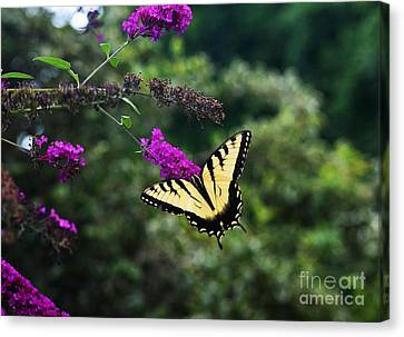 Canvas Print featuring the photograph Out Of Bounds by Judy Wolinsky