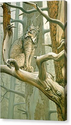 Out Of Reach - Lynx Canvas Print by Paul Krapf