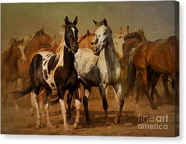 Out Of The Dust Canvas Print by Tony Bruguiere