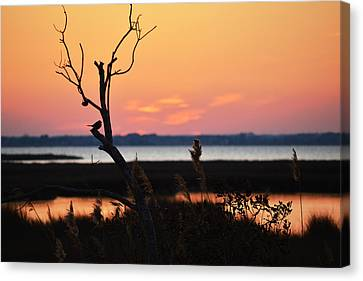 Canvas Print featuring the photograph Ocean City Sunset Out On A Limb by Bill Swartwout