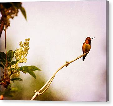 Canvas Print featuring the photograph Out On A Limb by Peggy Collins
