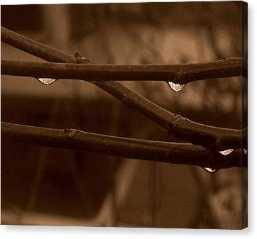 Canvas Print featuring the photograph Out On A Limb by Suzy Piatt