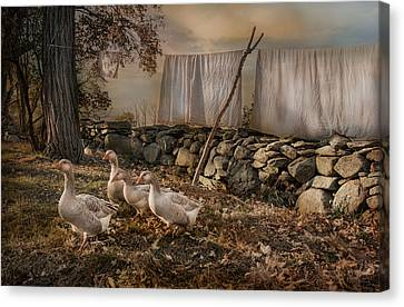 Out To Dry Canvas Print by Robin-Lee Vieira