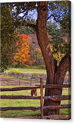 Out To Pasture Canvas Print by Joann Vitali