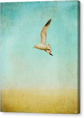 Out To Sea - Wildlife - Seagull Canvas Print