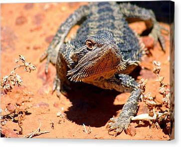 Canvas Print featuring the photograph Outback Lizard 2 by Henry Kowalski