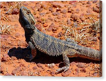 Canvas Print featuring the photograph Outback Lizard by Henry Kowalski