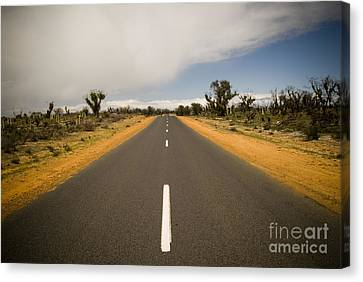Outback Road Canvas Print by Tim Hester