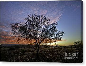 Outback Sunset  Canvas Print