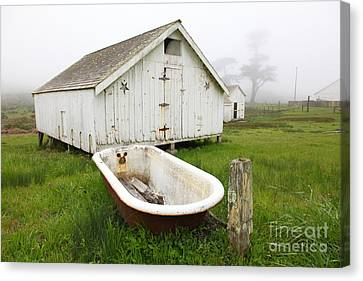 Outdoor Bath At The Old Pierce Point Ranch In Foggy Point Reyes California 5d28136 Canvas Print by Wingsdomain Art and Photography