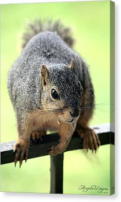 Outdoor Life - Squirrel 1 Canvas Print by Angela Rogers
