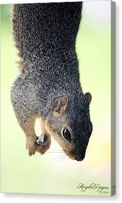 Outdoor Life - Squirrel 2 Canvas Print by Angela Rogers