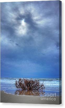 Outer Banks - Driftwood Bush On Beach In Surf I Canvas Print by Dan Carmichael