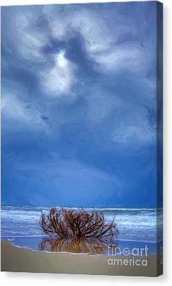 Outer Banks - Driftwood Bush On Beach In Surf II Canvas Print by Dan Carmichael