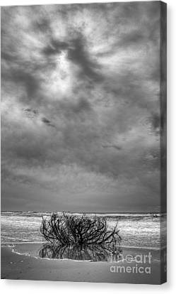 Outer Banks - Driftwood Bush On Beach In Surf IIi Canvas Print by Dan Carmichael