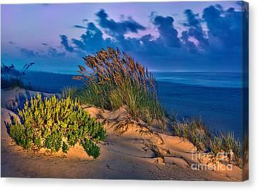 Outer Banks - Ocracoke Sand Dunes Oats Sunrise Canvas Print by Dan Carmichael