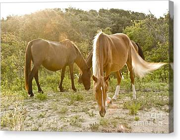 Outer Banks Wild Horses Canvas Print by Mike Baltzgar