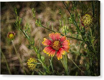 Outer Banks Wildflower Canvas Print by Bradley Clay
