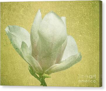 Outer Magnolia Canvas Print by Jeff Kolker