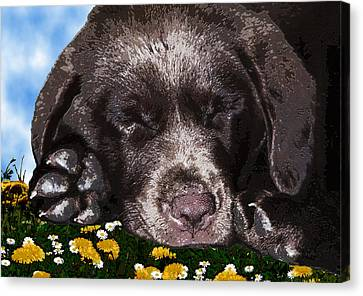 Outside Portrait Of A Chocolate Lab Puppy  Canvas Print by Chris Goulette