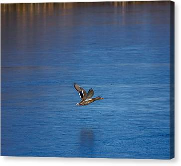 Over Frozen Pond Canvas Print by Ernie Echols