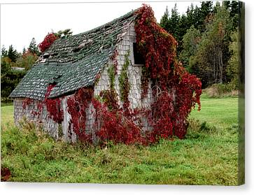Canvas Print featuring the photograph Overgrown by Trever Miller