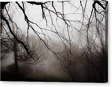 Overhanging Branches Canvas Print by Mela Luna