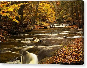 Tree Roots Canvas Print - Overlapping Water by Amanda Kiplinger