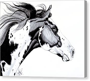 Overo Paint Horse Canvas Print by Cheryl Poland