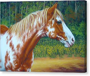 Overo Paint Horse-colorful Warrior Canvas Print by Margaret Stockdale