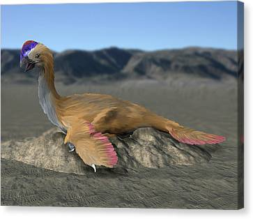 Oviraptor Philoceratops Sitting On Nest Canvas Print by Nobumichi Tamura