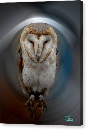 Owl Alba  Spain  Canvas Print by Colette V Hera  Guggenheim