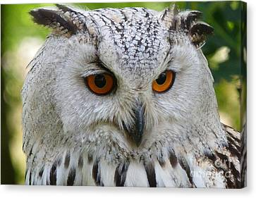 Canvas Print featuring the photograph Owl Bird Animal Eagle Owl by Paul Fearn
