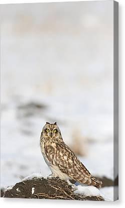 Canvas Print - owl by Dragomir Felix-bogdan