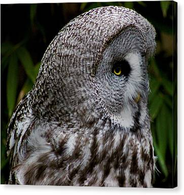 Owl Eye Canvas Print by Martin Newman