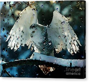 Natural Art Canvas Print - Owl In Snow by Marvin Blaine