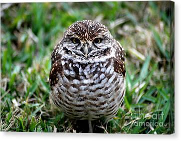 Owl. Best Photo Canvas Print by Oksana Semenchenko