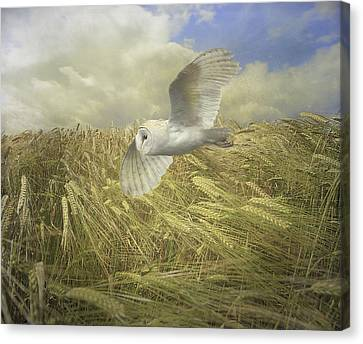 Owl On The Prowl Canvas Print by Roy  McPeak
