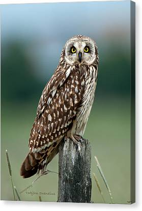 Owl See You Canvas Print by Torbjorn Swenelius