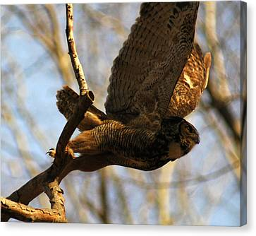 Owl Take Off Canvas Print by Raymond Salani III