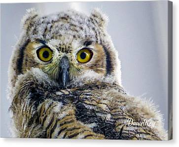 Owlet Close-up Canvas Print