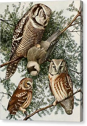 Owls Canvas Print by Dreyer Wildlife Print Collections
