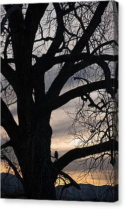 Owls Roost Canvas Print by Eric Rundle