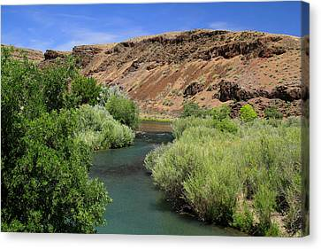 Owyhee River Great Brown Trout Canvas Print by Ed  Riche