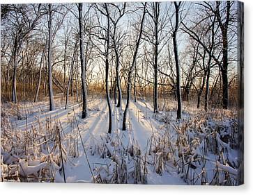 Oxbow Park Golden Hour Canvas Print by Jackie Novak