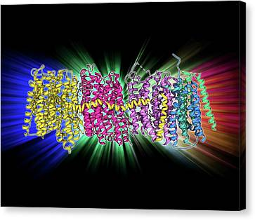 Oxidoreductase Enzyme Complex Canvas Print by Laguna Design