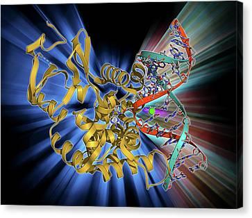 Oxoguanine Glycosylase Complex Canvas Print by Laguna Design