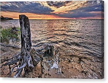 Oyster Bay Stump Sunset Canvas Print