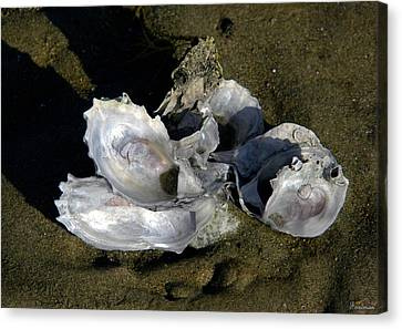 Oyster Collage Canvas Print by Michael Friedman